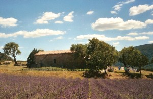 Savons Provence